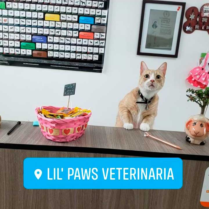 Lil´Paws