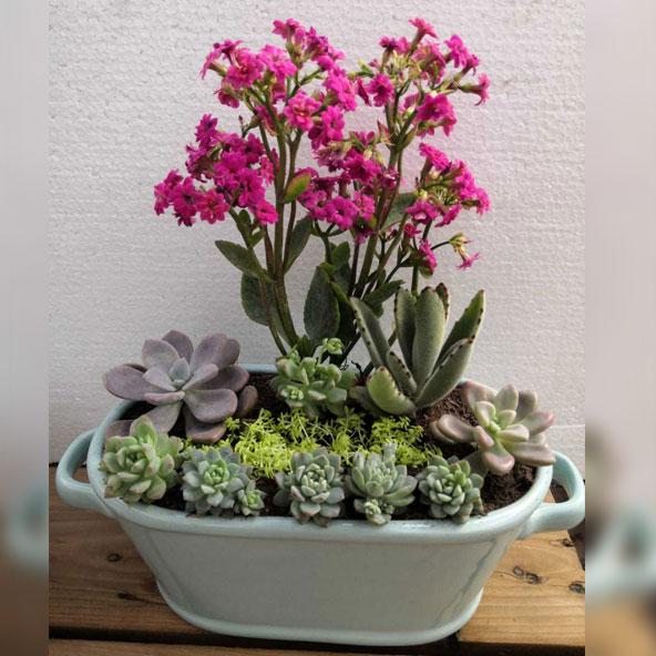 Poti Plants