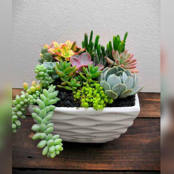 poti-plants-001