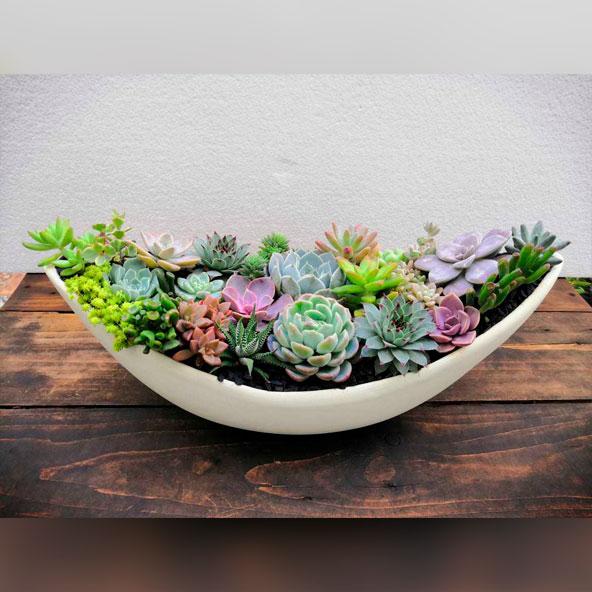 poti-plants-002