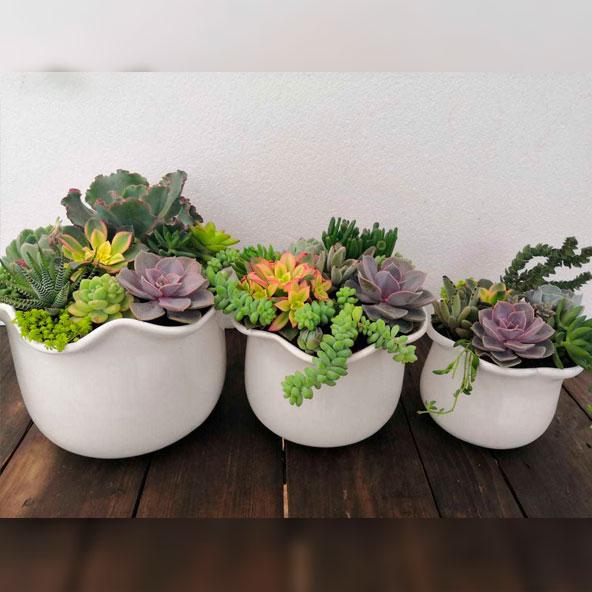 poti-plants-003