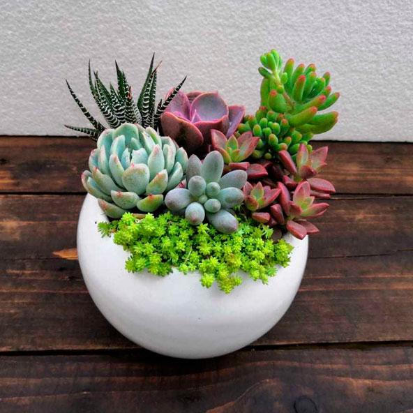 poti-plants-004